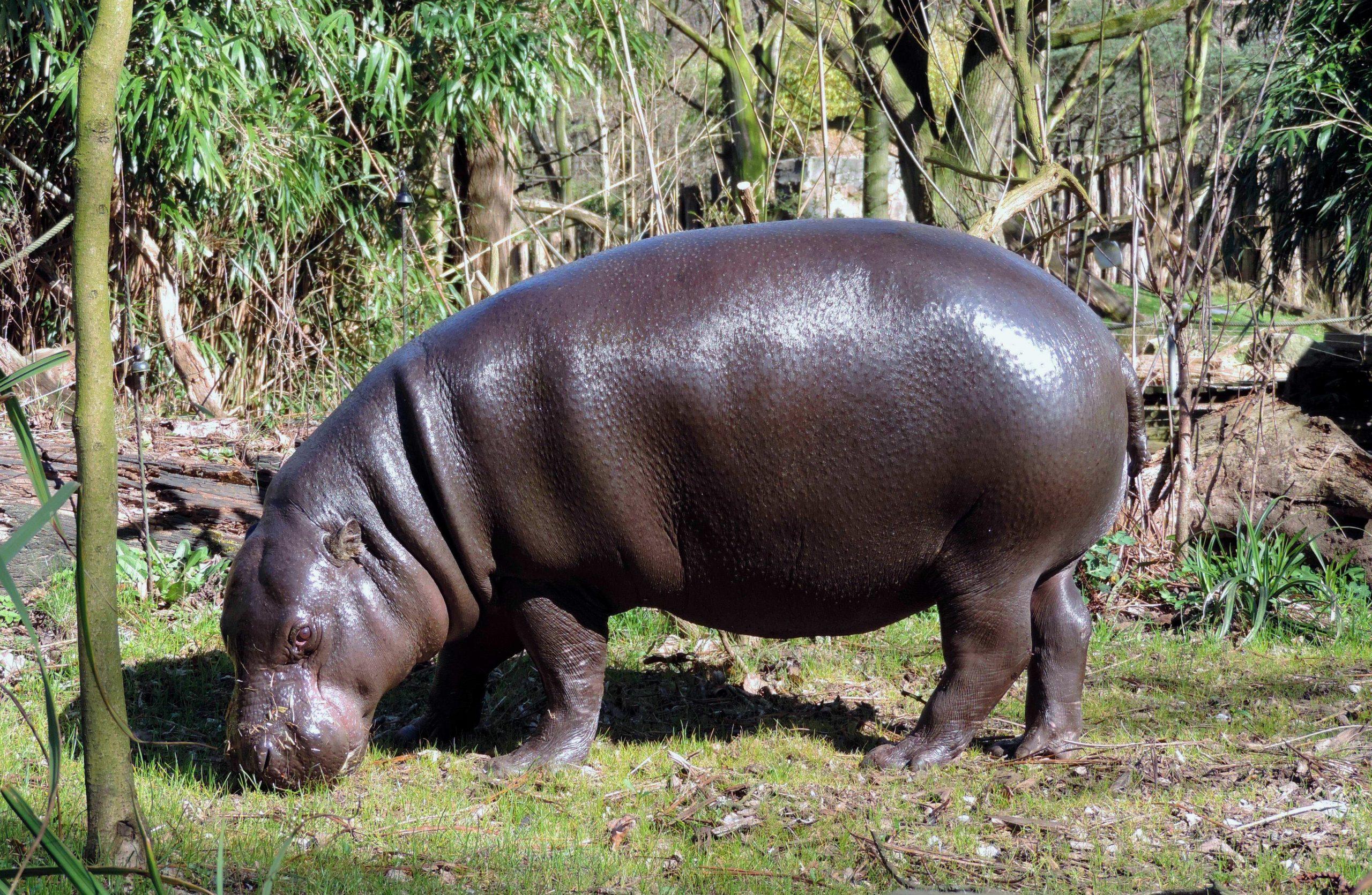 Skin deep: When mammals re-entered water